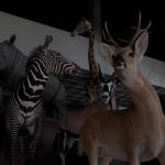 Zoo Museum, Kaunas 2013