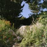 gardening_the_suburbs_25_x_25_cm_